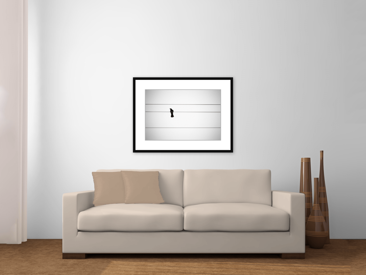 """Bird on a Wire"" Framed Photography Print Above a Couch"
